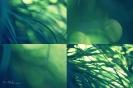 Příroda_1